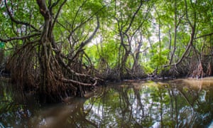 Mangrove Forest near Ahungalla, Galle District, Southern Province, Sri Lanka