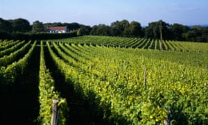 English wine is growing in reputation