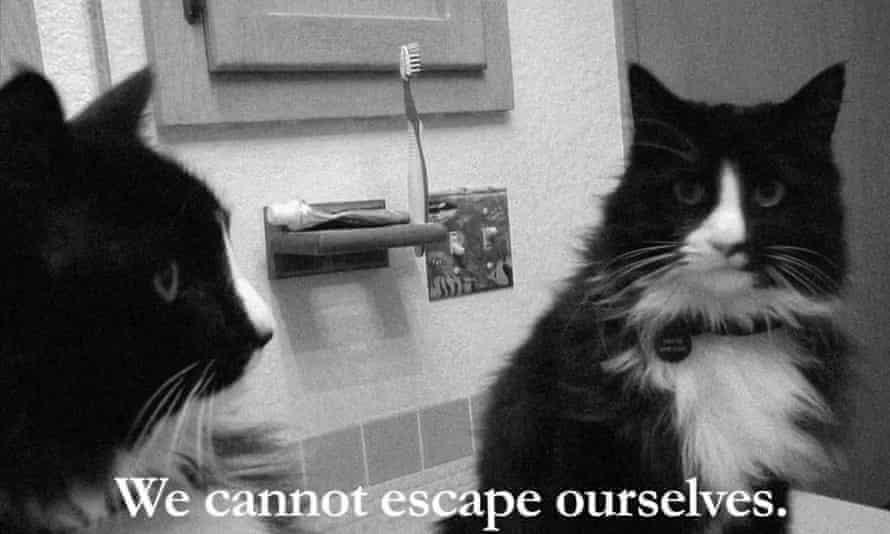 Henri, the Existential Cat.