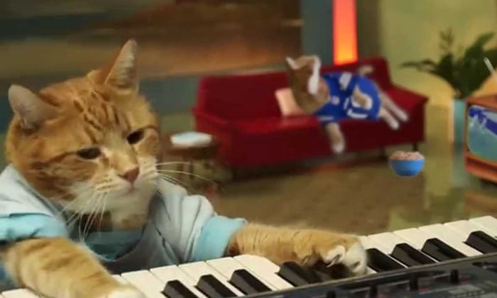 YouTube: the most popular cats from its first 10 years