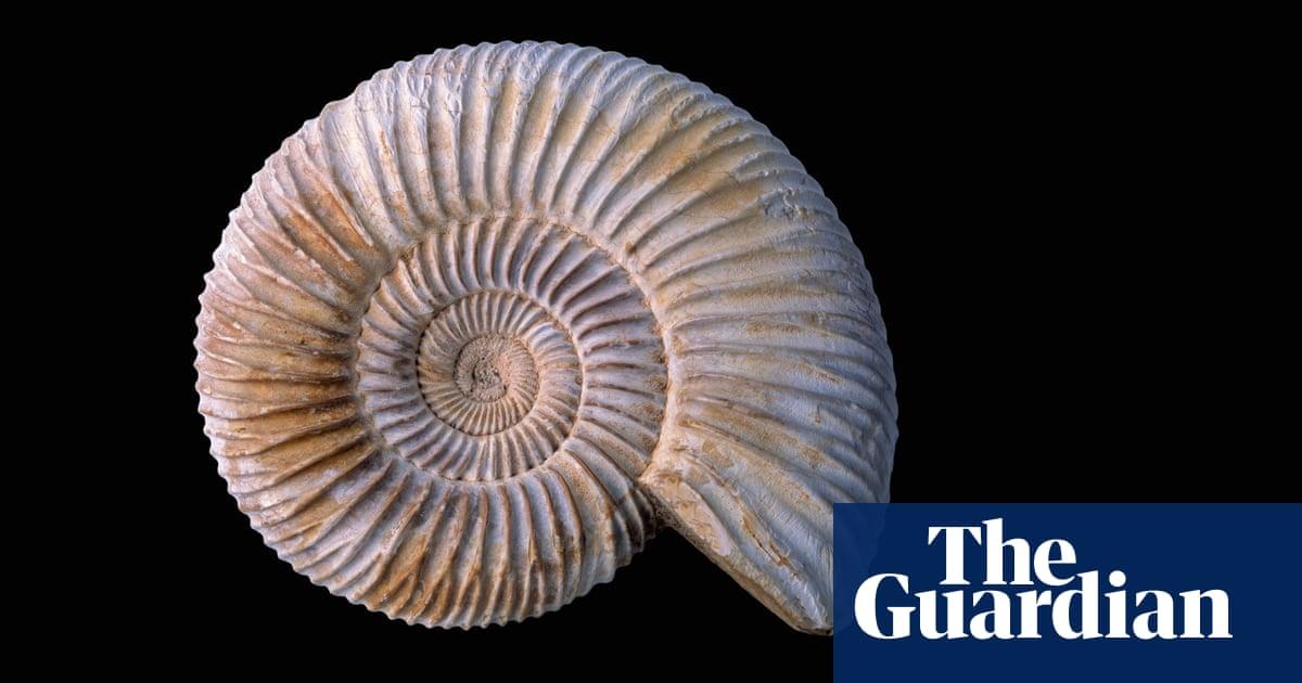 How to teach … fossils | Teacher Network | The Guardian