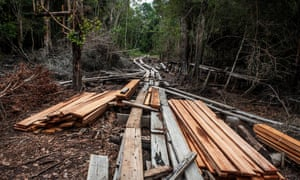 A view of timbers and logging railroad is used for transport logs from tropical rainforest made by illegal loggers at Kerumutan protected tropical rainforest,  in Riau province, Sumatra, Indonesia.