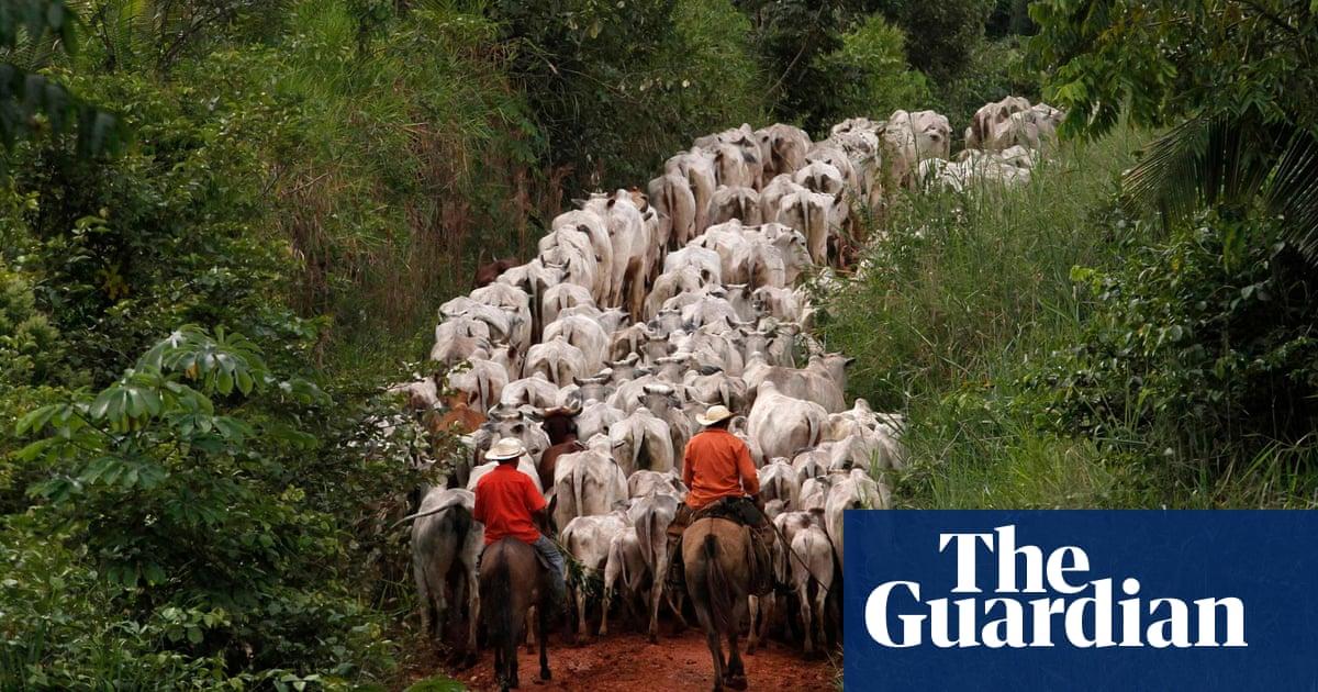 Brazil beef industry pledges cut Amazon deforestation