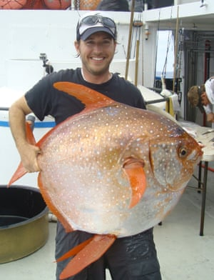 The mysterious warm-blooded opah