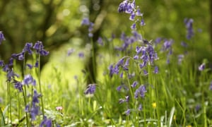 Carr HouseWild Garden Weekends (£16.99 www.wildthingspublishing.com)