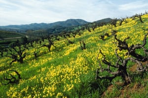 Kunde Family Winery, Sonoma