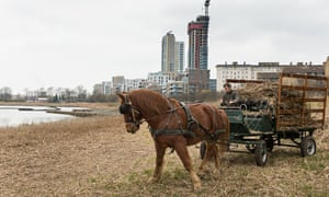 A Suffolk Punch hauls reeds in the Woodberry Wetlands. Photograph: Penny Dixie/London Wildlife Trust