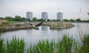 'It's a man-made structure turned into a nature reserve in the centre of a massive urban conurbation' ... Woodberry Wetlands. Photograph: Graeme Robertson for the Guardian