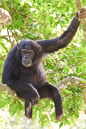 Max lost parts of both his legs to two different snare injuries. He can still climb trees.