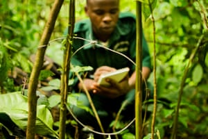 Junior Ranger Godi Nyesiga takes down data before removing a neck snare.