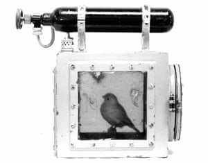 One of the last canaries to be used in coal mines