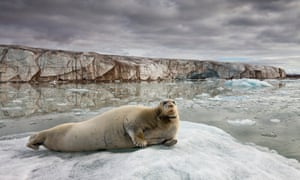 Inuit hunters' plea to the EU: lift ban seal cull or our lifestyle