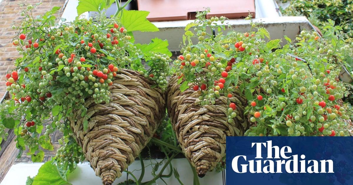 ce28de8dba8de7 Student gardeners  here s how to grow your own fruit and veg ...