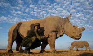 Can we save the rhino from poachers with a 3D printer