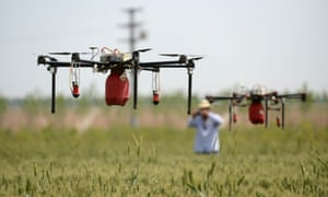 Drones fly over a wheat field to spray insecticide in Shijiazhuang, north China's Hebei Province.