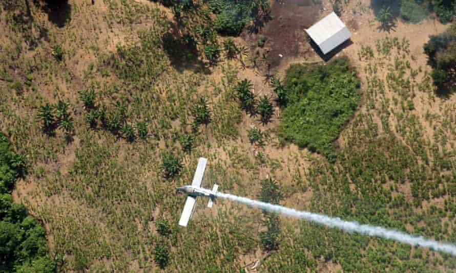 A coca crop being poisoned by a Colombian police plane in a 2008 file photo.