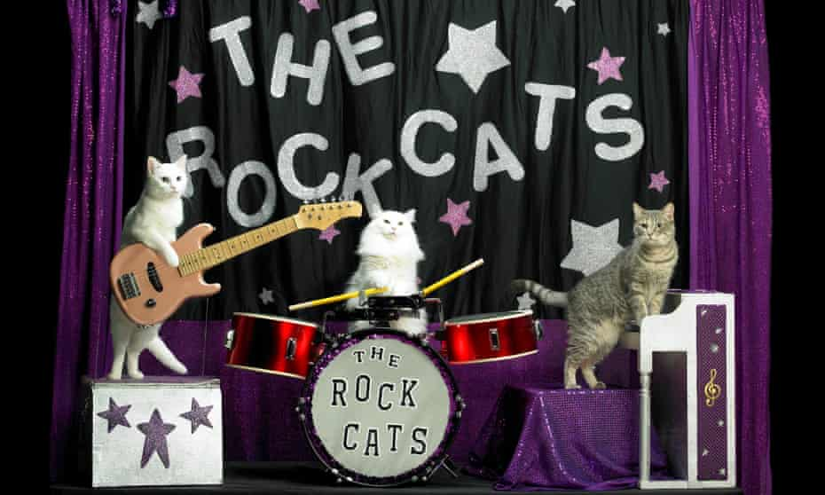 The Amazing Acro-Cats perform on instruments.