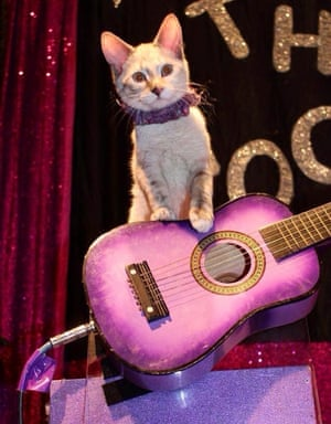 An Acro-Cat stands with a guitar.