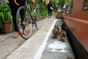emporary duck lanes have been painted on busy towpaths in London, Birmingham and Manchester to highlight the narrowness of the space that is shared by a range of people  and wildlife on May 15, 2015 in London, England. The Canal & River Trust's new campaign, Share the Space, Drop your Pace, is encouraging everyone who uses the towpaths to be considerate of others by sharing the space and dropping your pace to keep the towpaths a special place for everyone.