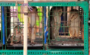 Long-tailed macaques and owls seen at the Jatinegara bird market on May 17, 2015 in Jakarta, Indonesia.  Primates, owls, otters, snakes and other endangered animal are sold openly in the middle of Jakarta. Sales of endangered animals has become a major problem in Indonesia.