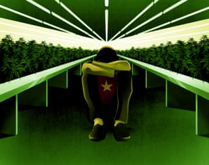 The number of Vietnamese cannabis factories in the UK has grown by 150% in the last two years