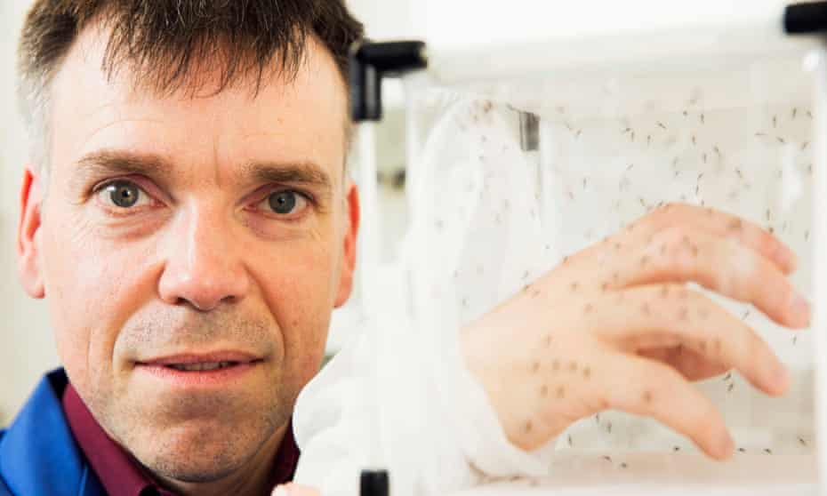 Dr Luke Alphey with his hand inside a box full of non-biting Oxitec male mosquitoes.
