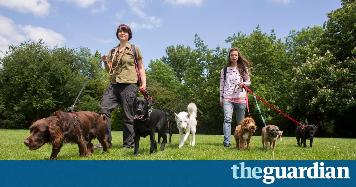 Dog Walker Salary Australia