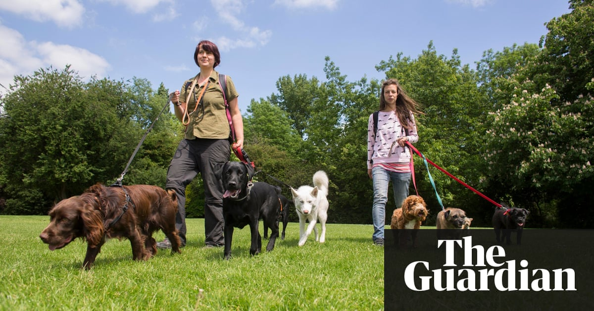 Dog walkers why ditching the rat race is no walk in the park dog walkers on peckham rye south london this week solutioingenieria Image collections