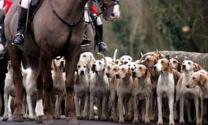 Foxhunting ban Scotland