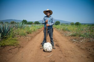 There are over 200 different species of agave plants but tequila can only be made from one plant, the blue Weber Agave. Jose Guadelupe, who has been a jimador for a 14 years, stands proudly over a freshly cut piña from the blue Weber agave