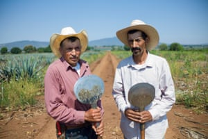 Jimadores Alberto Ramirez, 49, and Mariano Meza, 40, clutch their coas, the sharp long-handled tool used for harvesting the spiky agave plants from the volcanic soil of the north western highlands of Mexico. It takes between six to eight years for the plants to ripen before they are harvested by the jimadores and sent to the Patron distillery