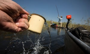 The water in the Delta is so clean and well-filtered that the team is able to drink directly from the wetlands.