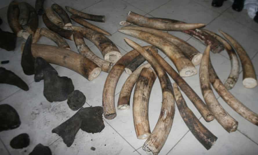 Elephant ivory and rhino horn
