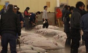 Tuna auction at the Tsukiji fish market in Tokyo.
