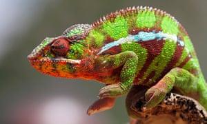 Bruce Blunt blew marijuana smoke into his pet chameleon's mouth.