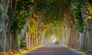 tree lined road nt Gignac Languedoc France NR