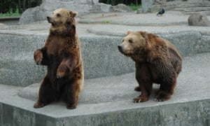 Bears at Warsaw zoo, where the incident occurred.