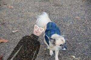 Warhol's Dog