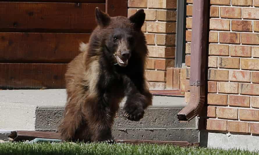 casper the bear