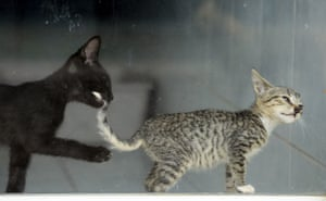 Kittens play in a window at the Animal Rescue Centre in San Rafael de Heredia, Costa Rica
