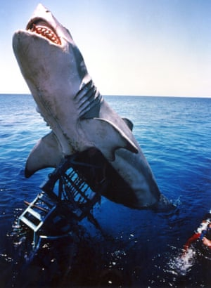 40 Years Of Spielberg S Jaws In Pictures Film The