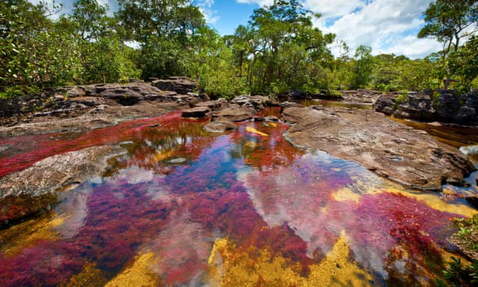 Colors at Cano Cristales, Colombia Underwater plants