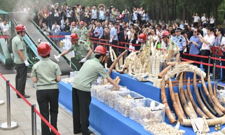 Illegal ivory is crushed in Beijing, China, 29 May