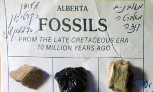Fossils from the Royal Tyrrell Museum.
