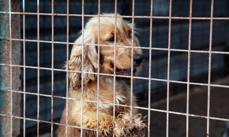 Ending the disgrace of puppy farms: are Victoria's new laws the