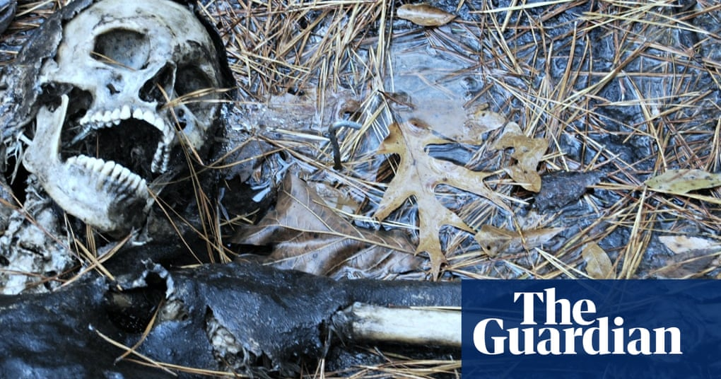 c42bca779d Life after death: the science of human decomposition | Science | The  Guardian