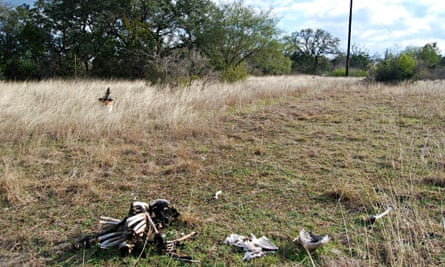Skeletonized human remains at the San Marcos body farm