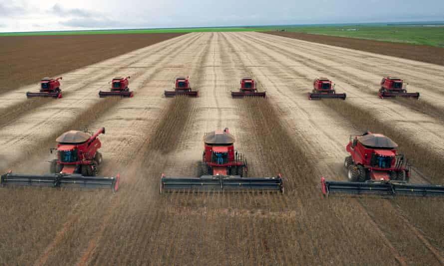 Combines harvest soybeans in Mato Grosso, Brazil. Deforestation caused by soy production has become a growing problem in the region.