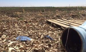 fallow field california drought mendota