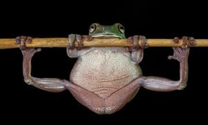 Frog, legs spread clutching a twig